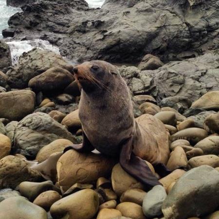 Good Seal 3